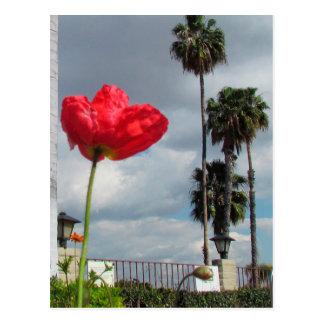 Carte postale - aspirations de pavot