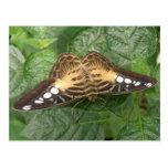 Carte postale assez tropicale de papillon de tonde