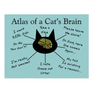 Carte Postale Atlas du cerveau d'un chat