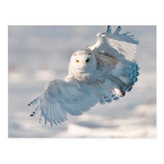 Carte Postale Atterrissage de hibou de Milou sur la neige