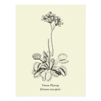 Carte Postale Attrape-mouche de Vénus, plante carnivore