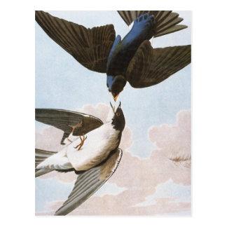 Carte Postale Audubon : Hirondelle d'arbre