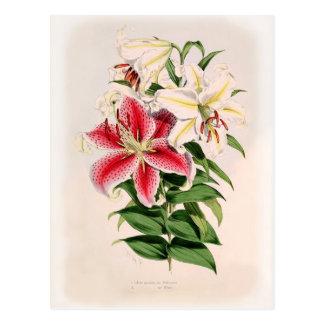 Carte Postale Auratum de Lilium