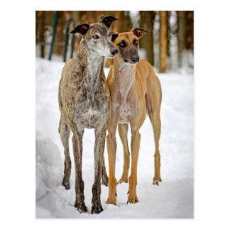 Carte Postale Autocollants de chiens de chiot de lévrier Brindle