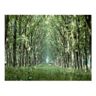 Carte Postale Avenue des arbres plats, parc de château,