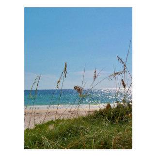 Carte Postale Avoine de plage et de mer
