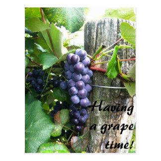 Carte Postale avoir un grand établissement vinicole de vignoble