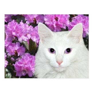 Carte Postale Azalées blanches de chat