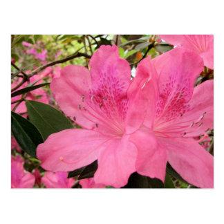 Carte Postale Azalées de roses indien