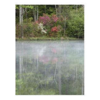 Carte Postale Azalées relfecting dans un étang pendant tôt