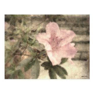 Carte Postale Azalées roses 1 cru