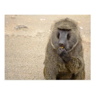 Carte Postale babouin dans le buisson africain
