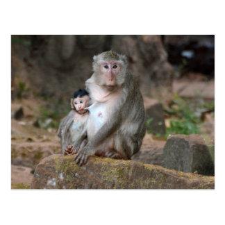 Carte Postale Babouin de mère avec le bébé