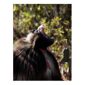 Carte Postale Babouin masculin de gelada (gelada de