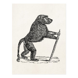 Carte Postale Babouins vintages de singe de bâton de marche de