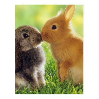 Carte Postale Baiser de lapin