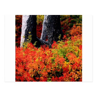 Carte Postale Baker de bâti d'automne