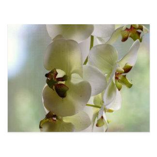Carte postale balançante d'orchidées