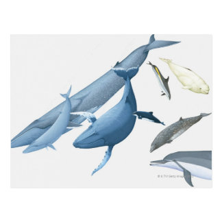 Carte Postale Baleines