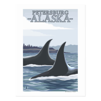 Carte Postale Baleines #1 - Pétersbourg, Alaska d'orque