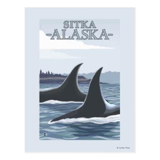 Carte Postale Baleines #1 - Sitka, Alaska d'orque