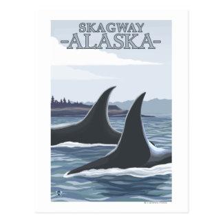 Carte Postale Baleines #1 - Skagway, Alaska d'orque