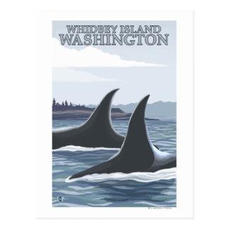 Carte Postale Baleines #1 - Whidbey, Washington d'orque