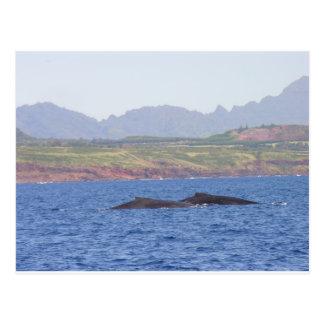 Carte Postale Baleines de bosse hawaïennes