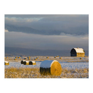 Carte Postale Balles rustiques de grange et de foin après une