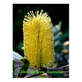 Carte Postale Banksia jaune 2, salutations d'Australie
