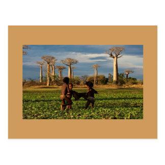 Carte Postale Baobab de Madagascar