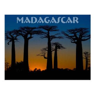 Carte Postale Baobabs de Madagascar