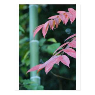 Carte Postale Beau bambou