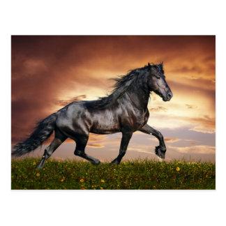 Carte Postale Beau cheval