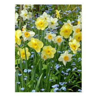 Carte Postale Beau jardin jaune de jonquille