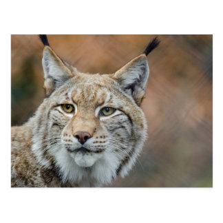 Carte Postale Beau premier plan de lynx