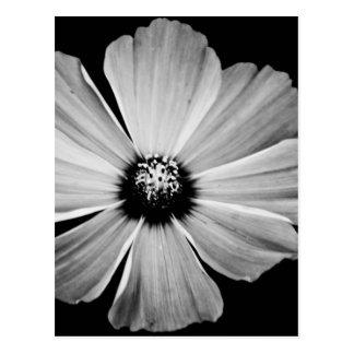 Carte Postale Beauté en noir et blanc