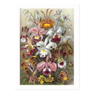 Carte Postale Beaux-arts d'Ernst Haeckel d'orchidées