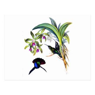 Carte Postale Beaux colibris et orchidées pourpres