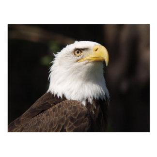 Carte Postale Bel Eagle chauve…