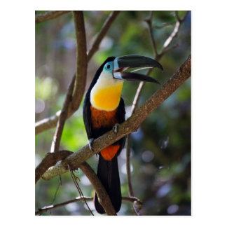 Carte Postale Bel oiseau de toucan dans un paysage de nature