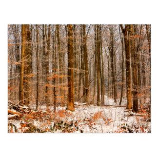 Carte Postale Belle forêt d'hiver avec la neige
