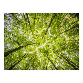 Carte Postale Belle forêt verte