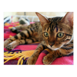 Carte Postale Bengal_laying.png