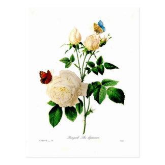 Carte Postale Bengale de Rosa