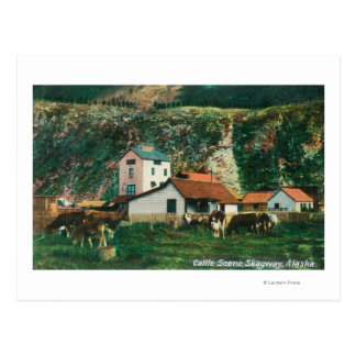 Carte Postale Bétail parmi des granges SceneSkagway, AK