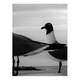Carte Postale Birds of a Feather