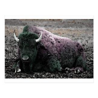 Carte Postale Bison
