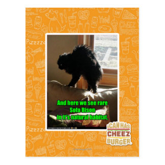 Carte Postale Bison de sofa