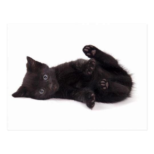 Carte Postale black kitten
